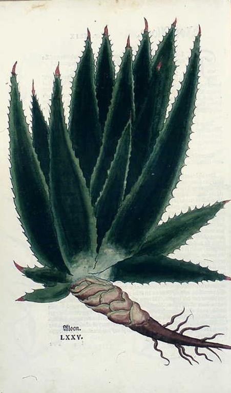 Aloe: Abführmittel, antiabsorptiv, hydragog